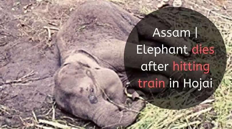 Assam   Elephant dies after hitting train in Hojai